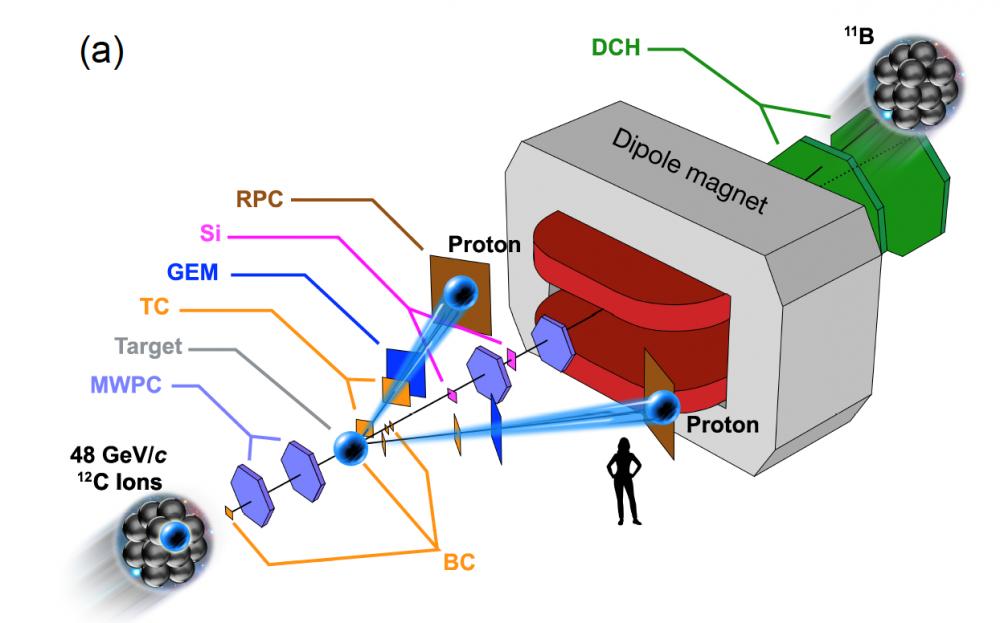 Le couple nucléaire épié à travers des noyaux transparents